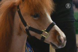 Мини-лошадь лечит детей в Нью-Йорке