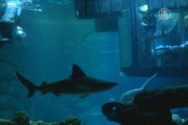 Как насчёт целой ночи в окружении акул?