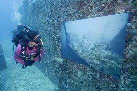На затопленном корабле открыли подводную выставку