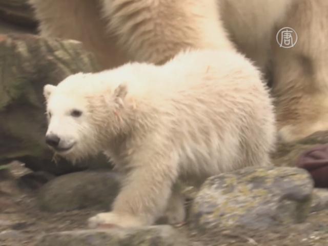 Германия: публике представили белого медвежонка