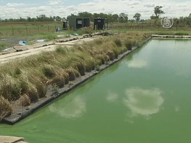 Трава стала главным оружием водоочистной станции