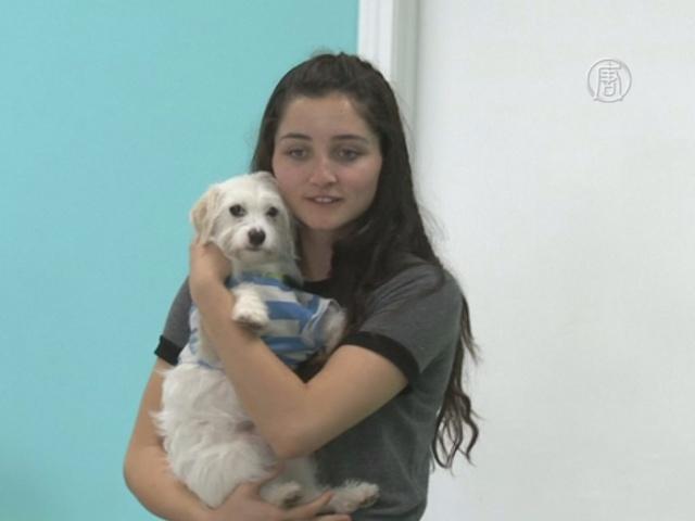 В «собачьем кафе» в США можно «усыновить» пса