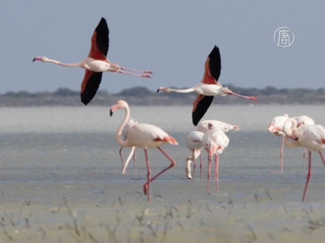Специалисты по птицам состязались в Израиле