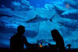 Пара из Китая провела ночь в окружении акул