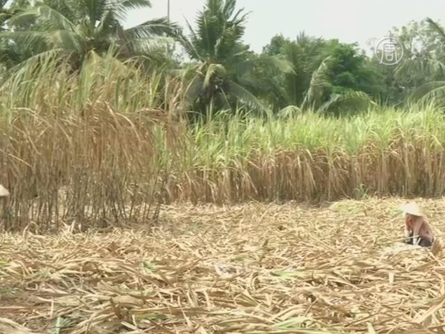Засуха губит поля в дельте реки Меконг