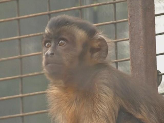 В ЮАР спасли 60 истощенных обезьян