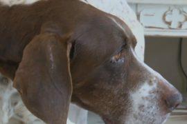 Собака нашлась через 10 лет