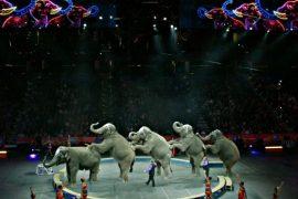 Знаменитый цирк США закрывает шоу слонов