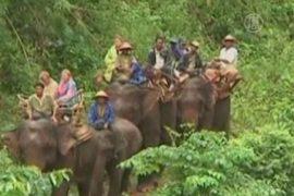 Дом престарелых для слонов привлекает туристов