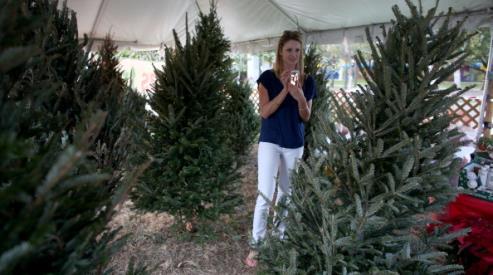 Натуральная новогодняя елка: советы и рекомендации