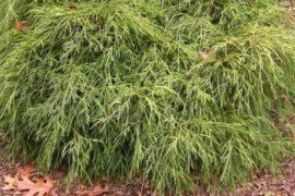 За уникальными растениями – в  Россельхозпитомник
