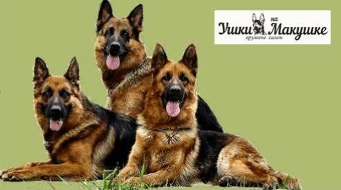 Cтрижка собак на дому в Москве