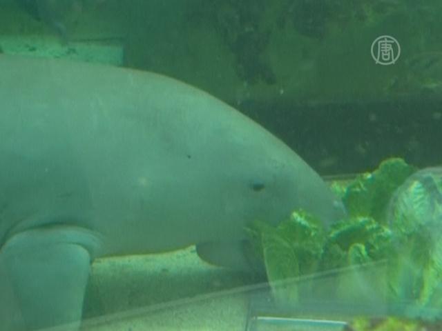 В обновленном океанариуме Сиднея стало больше акул