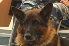 Служебные собаки расследуют преступления в Москве