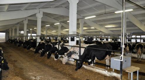 Качество молока и молочной продукции