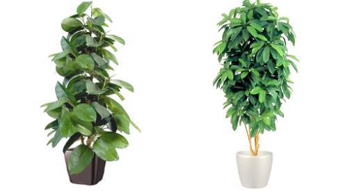 Искусственные растения в интерьере офиса