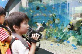 Выбор первого аквариума: с чего начать