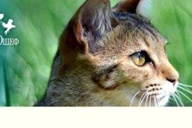 Основы правильного питания животных с магазином Зоошеф