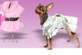 Одежда для собак – больше, чем просто дань моде
