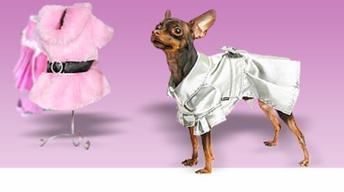 Одежда для собак — больше, чем просто дань моде