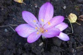 Какие цветы нужно сажать осенью