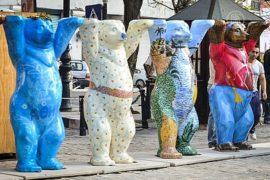 Медведи-путешественники приехали на Кубу