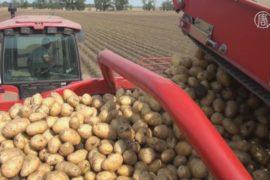 Рост цен на продукты нового урожая неизбежен?