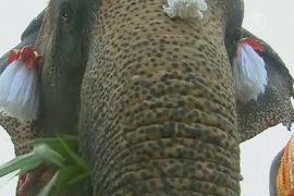 Тайцы угощают слонов фруктами в честь праздника
