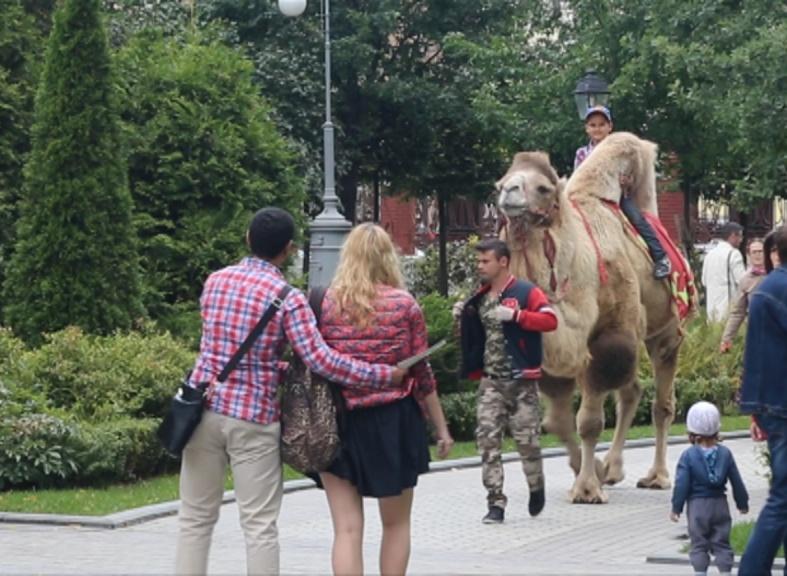 Верблюд и соколы знакомят с культурой Востока