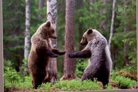 Медведи – герои фотосюжетов петербургского мастера
