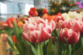 В Ботаническом саду МГУ распустились тысячи цветов